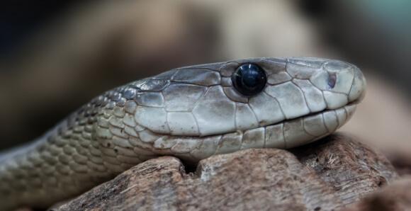 snake-653644_1920__600